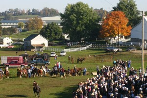 Charm-Days-Horse-Races