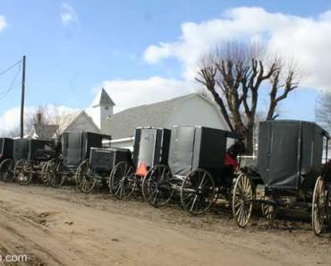 Buggies-at-Mt.-Hope-Ohio-Horse-Auction