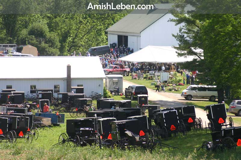 Amish horse and buggies at a farm estate auction